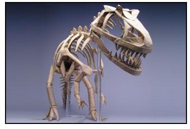 Allosaurus_1